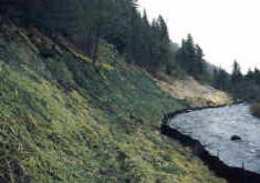 Photo of Maxville Tailings After Reclamation