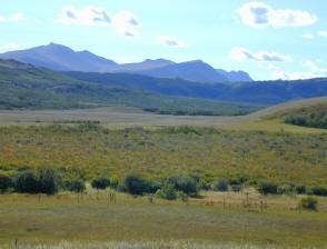 Example of a Carr Fen on the Rocky Mountain Front Range