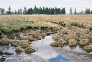 An example of an wetland that has been drained via piping