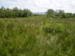 Fen in Glacier County, MT showing multiple different wetland vegetation types